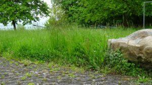 Zu Beginn der Arbeiten ist der Rasen kniehoch